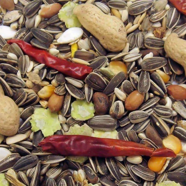 Colonels Parrot Feast
