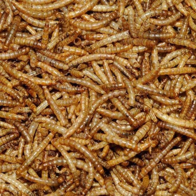 Bartholomews Dried Mealworms